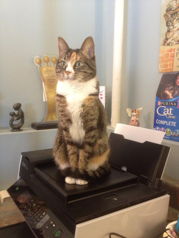 cats love to keep watch on their owners; in home offices one of their favorite places to keep watch is from atop of printers.